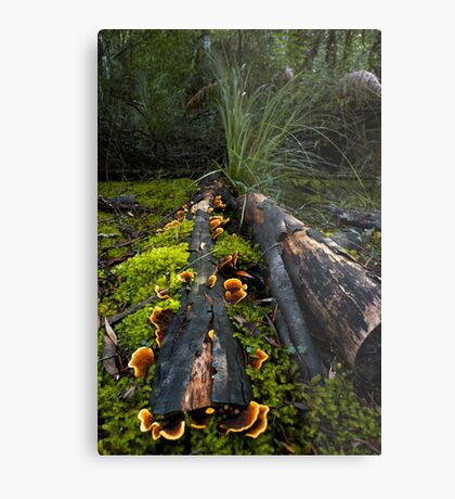 Fungi of the Forest Metal Print