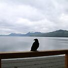 Crooked Foot 2: Icy Strait Point, Alaska by Elizabeth  Lilja