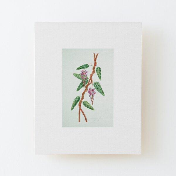 Native Lilac, Hardenbergia violacea  1998 Wood Mounted Print