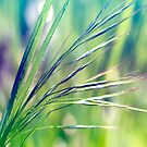 Grass colored by RosiLorz
