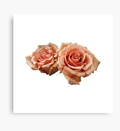 Two Peach Roses Canvas Print