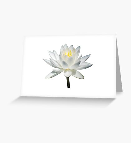 White Water Lily in Sunshine Greeting Card