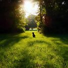 The Early Dog Catches The Bunny...........not really.  by Bine