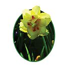 Yellow Double Daffodil by Susan Savad