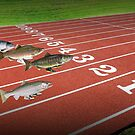 Salmon run by Susan Littlefield