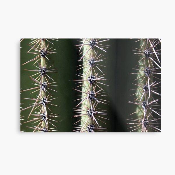 saguaro skins: ernesto Metal Print