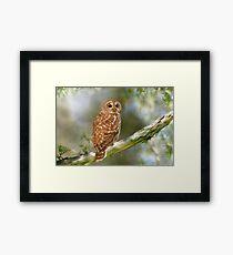 Owl Time Framed Print