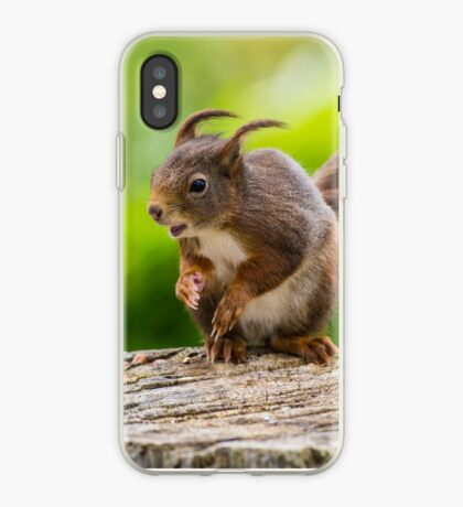 Windswept Red Squirrel iPhone Case