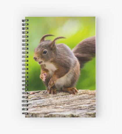 Windswept Red Squirrel Spiral Notebook