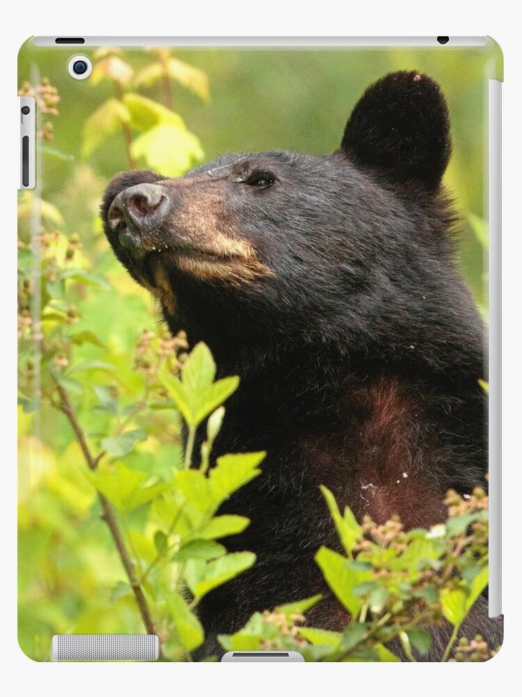Black Bear Standing Ipad Case Skin By Worlddesign Redbubble