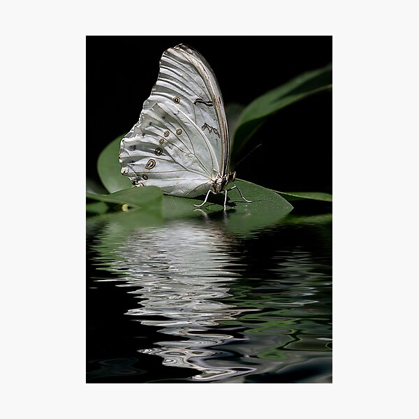 Moonlit Butterfly Photographic Print