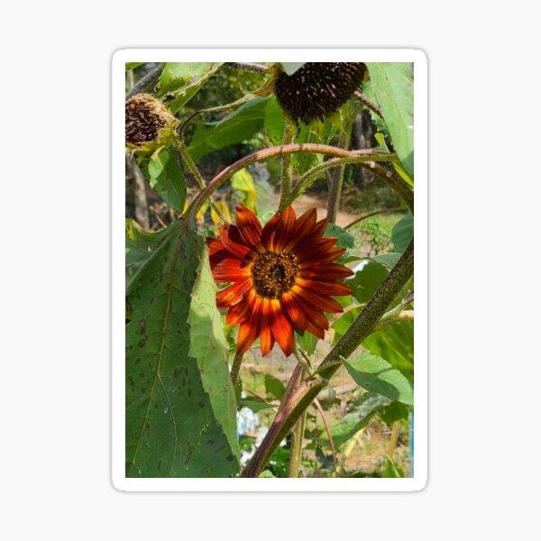 Ruby Sunflower Sticker