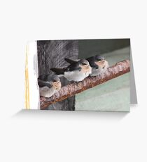 Young Welcome Swallows Greeting Card