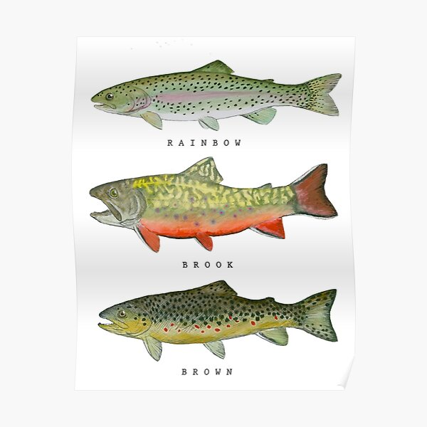 Trout Triad Poster