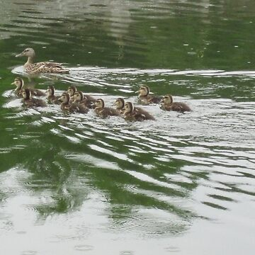 Eleven Duckling's in the Rain by ThomasMurphy
