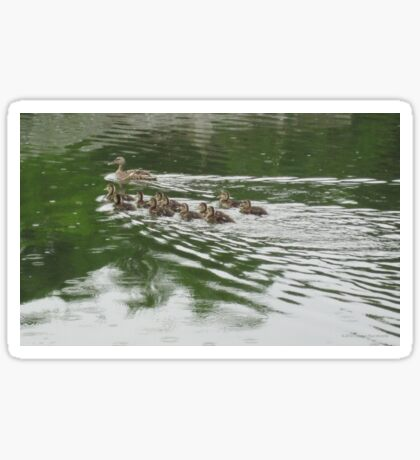 Eleven Duckling's in the Rain Sticker