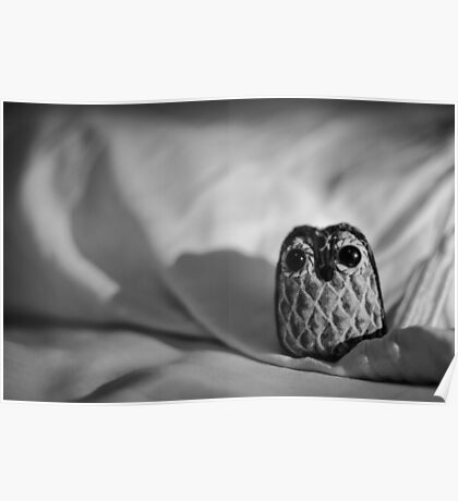 Unintentional Night Owl - The Flightless Fowl Poster