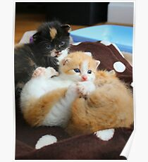 Litter of kittens Poster