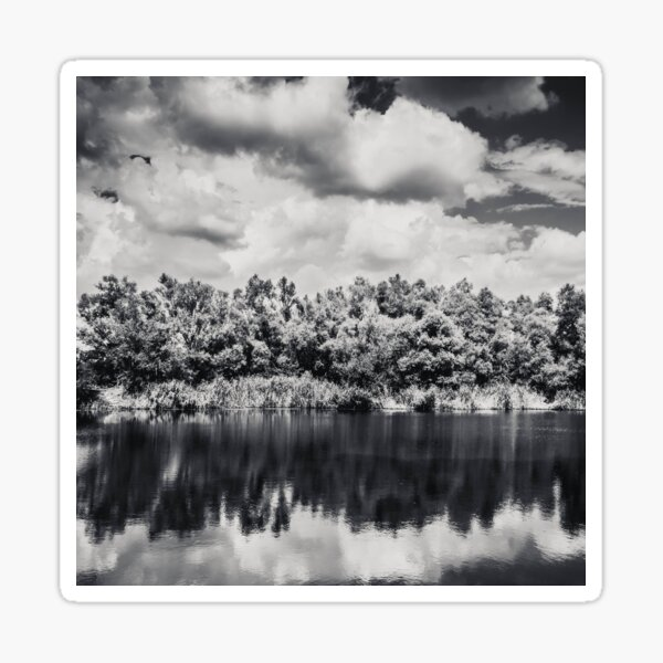Nature black and white photography Sticker