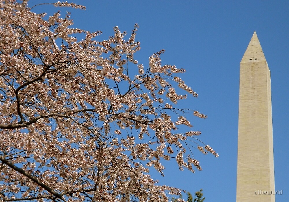 Cherry Blossoms in Washington, DC ^ by ctheworld