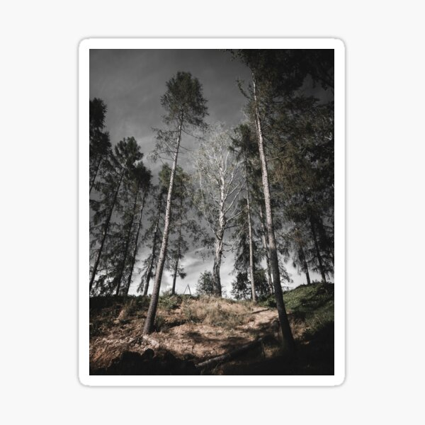 Color photography nature tree Sticker