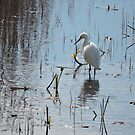 Little Egret: Grace  by CreativeEm