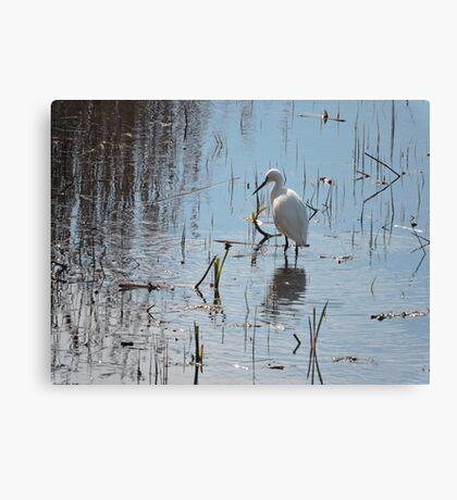 Little Egret: Grace  Canvas Print