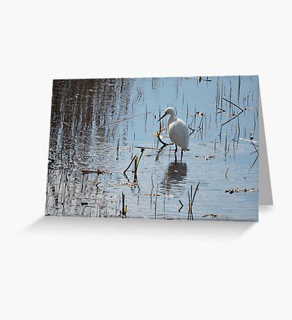 Little Egret: Grace  Greeting Card