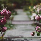 Garden Path no. 1 by Bethany Helzer