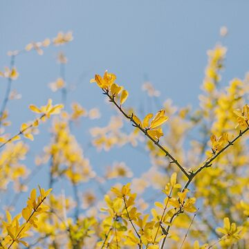 Yellow Leaves by hellotwiggs