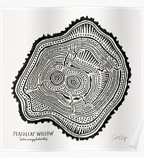 Peachleaf Willow – Black Ink Poster