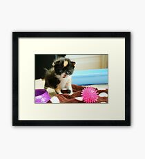 Tiny tortie Framed Print