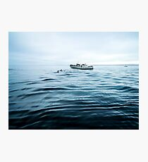 Dolphins in open sea Photographic Print