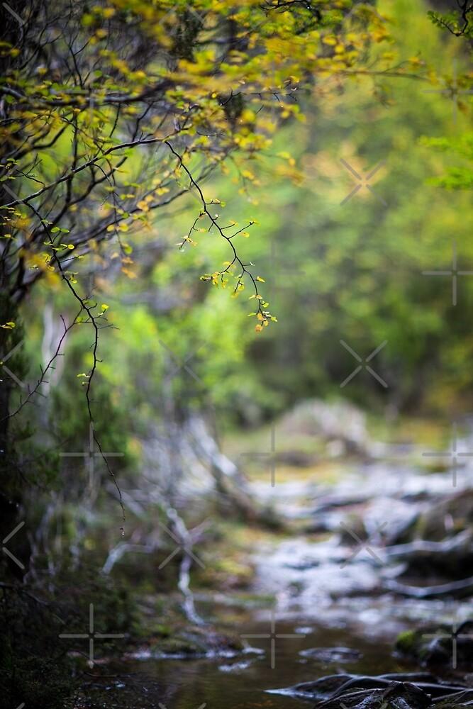 Life is a journey, not a destination by Mel Brackstone