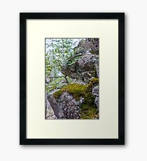 Stable Roots Framed Print