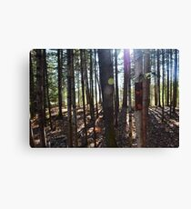 Staggered Serenity Canvas Print