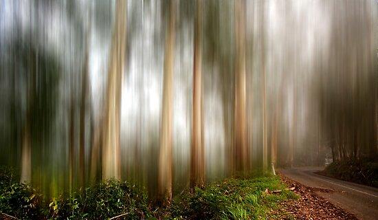 Mystery forest by Mel Brackstone