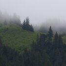 Misty Mountain by Elizabeth  Lilja