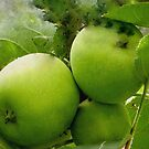 Granny Smith Apples Australian Apples by sandysartstudio