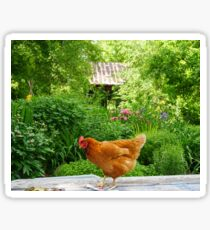 hen on picnic table Sticker