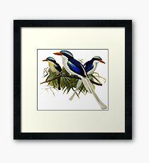 FF - Kingfishers - 1 Framed Print