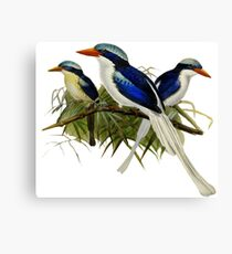 FF - Kingfishers - 1 Canvas Print
