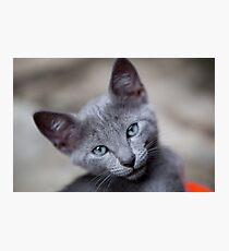 Cute little kitten Photographic Print