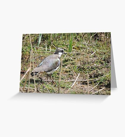 Lovely Lapwing Greeting Card