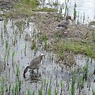 Greylag Geese by CreativeEm