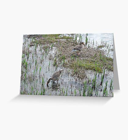 Greylag Geese Greeting Card