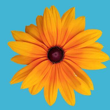 Flor silvestre de skinnyginny