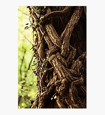 Enchanted forest. Natural photography print Photographic Print