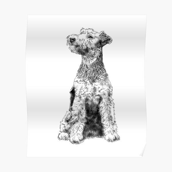 Sitting Welsh Terrier Dog  Poster
