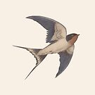 Barn Swallow by Terry  Fan